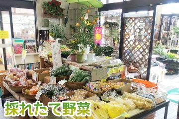 野菜img1